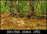 Нажмите на изображение для увеличения Название: P1010679.jpg Просмотров: 525 Размер:268.7 Кб ID:911