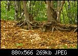 Нажмите на изображение для увеличения Название: P1010679.jpg Просмотров: 513 Размер:268.7 Кб ID:911
