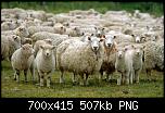 Нажмите на изображение для увеличения Название: Овцы.PNG Просмотров: 499 Размер:507.5 Кб ID:2638