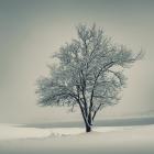 Winter_morning_by_leenik.jpg
